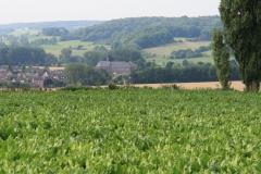 Wittem-Vergezicht-met-klooster-5