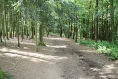Daniken-Pelgrimsweg-naar-Santiago-2