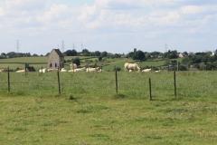 Ransdaal-214-Vergezicht-met-Sint-Theresiakerk-en-koeien