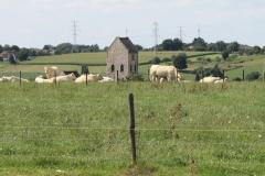 Ransdaal-216-Vergezicht-met-Sint-Theresiakerk-en-koeien
