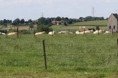 Ransdaal-217-Vergezicht-met-Sint-Theresiakerk-en-koeien